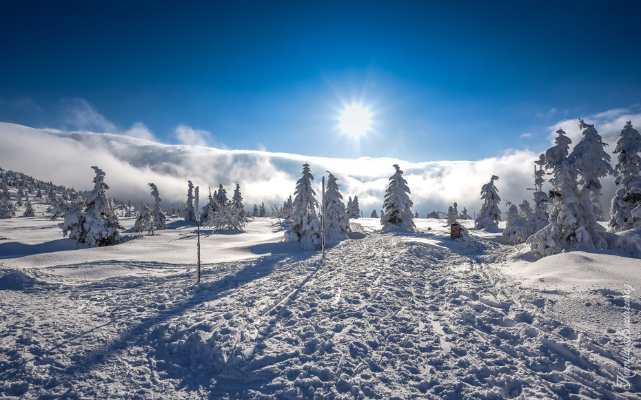 Szrenicy stronę Łabskiego Szczytu Karkonosze 0 nikon d750 Nikkor 20mm f/1.8 niebo zimowy śnieg pasmo górskie Natura górzyste formy terenu Chmura drzewo zamrażanie Góra