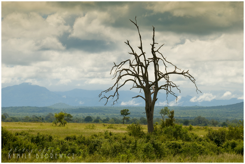 sawanna pochmurny dzień Krajobrazy/ klimaty Nikon D700 Sigma APO 50-500mm f/4-6.3 HSM Tanzania 0 drzewo niebo ekosystem Chmura łąka wegetacja roślina drzewiasta pustynia krzewy