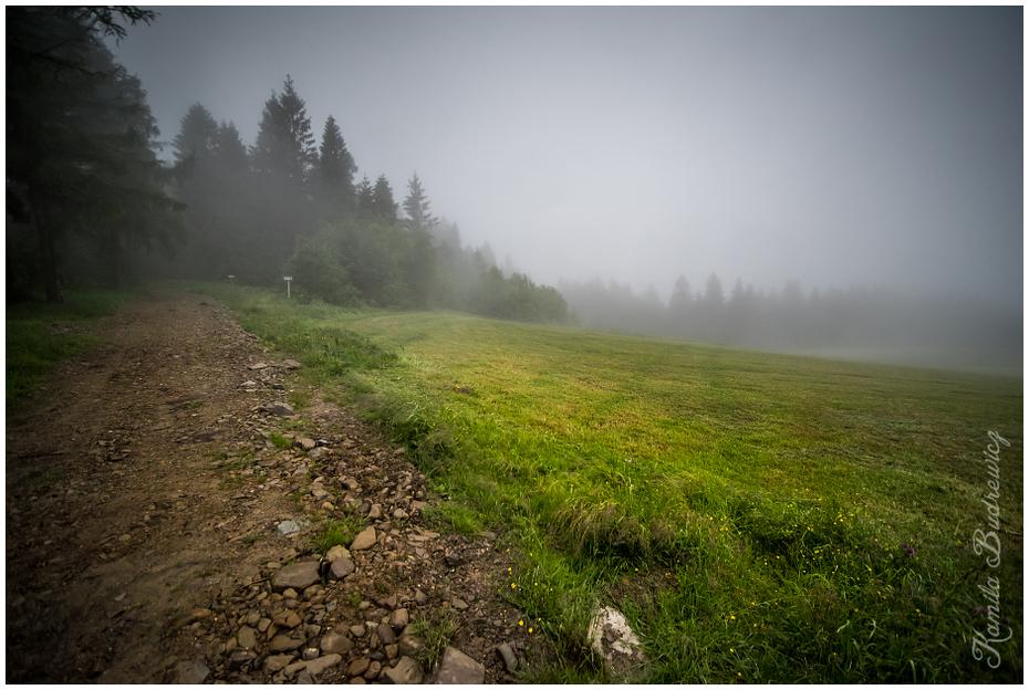 mgle Beskid Niski 0 nikon d750 Sigma 15-30mm f/3.5-4.5 Aspherical mgła Zielony zamglenie wegetacja drzewo górzyste formy terenu niebo pustynia ranek trawa