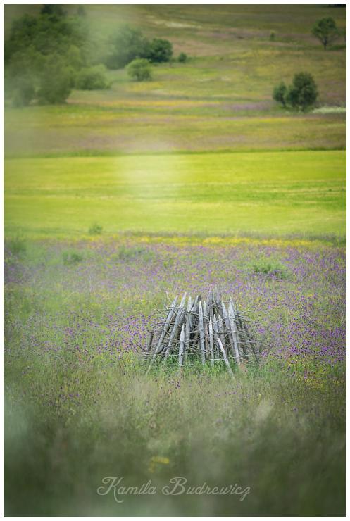 polna układanka Beskid Niski 0 nikon d750 Nikon AF-S Nikkor 70-200mm f/2.8G łąka ekosystem pole preria trawa dziki kwiat kwiat pastwisko niebo