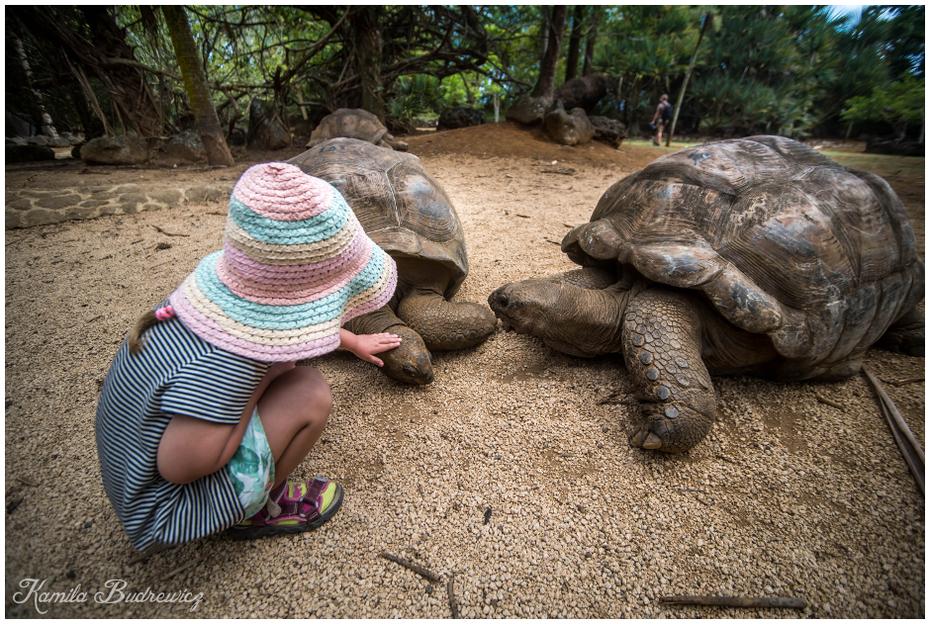 Kaja żółwiki Mauritius 0 nikon d750 Sigma 15-30mm f/3.5-4.5 Aspherical żółw gad zwierzę lądowe trawa