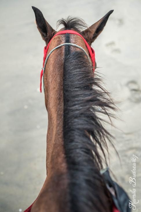 Poranek siodle Panama 0 nikon d750 Nikon AF-S Nikkor 50mm f/1.4G koń wodza koński hals uzda grzywa koń jak ssak uprząż konia ogier pysk szyja