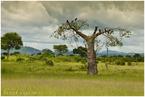 drzewo pełne ptaków