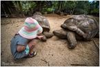 Kaja i żółwiki